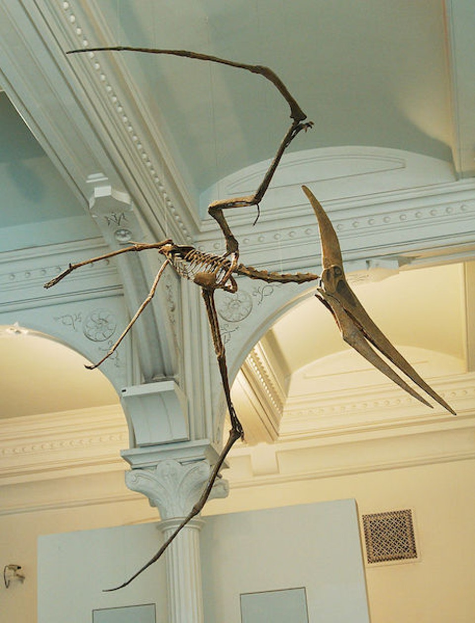 pterosauro_new_york_museo